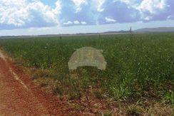 Fazenda – Porto Nacional – Tocantins